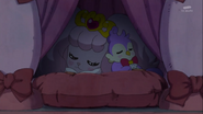 Pafu and Aroma sleeping in the dorm