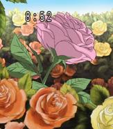 Mailpo en su forma de rosa