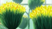 Flor desierto agave