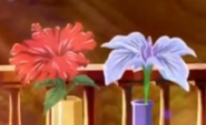 Flores mucardia