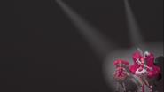 Sakura y Whip en el teatro de cine
