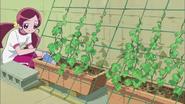 Tsubomi acomodando las plantas