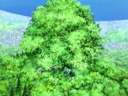 Земля зелени 14