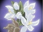 Flor corazon mandarina