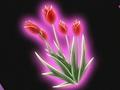 HPC12.Flower