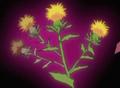 HPC41.Flower