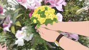 Flor de Colza