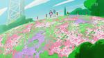 HPC10 Flower field