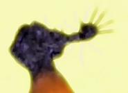 Rey haaku destruido 1º vez