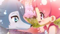PCDS Shizuku Sakura 1