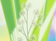 Flor corazon gypsophila