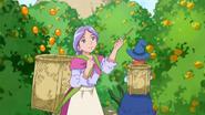 Собирание мандаринок