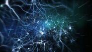 Neuromod 5