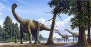 Camarasaurus-1-