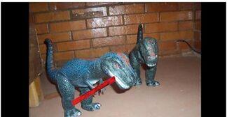 Daspletosaurus pf