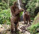 Gigantopithecus/Yeti