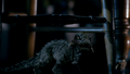 4x2 BabyKaprosuchus