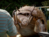 Giant Burrowing Insect