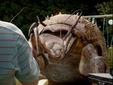 Insecto barrenador gigante
