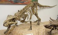 PostosuchusSkeleton
