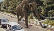 2x6 Mammoth 28