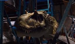 Albertosaurus head