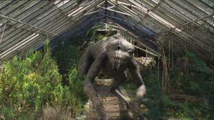 1x6 Predator 32