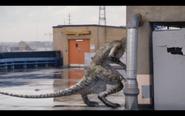 Microraptor 37