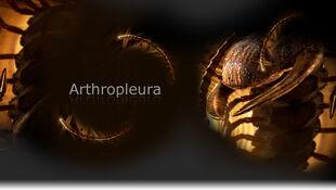 Arthropleura promo