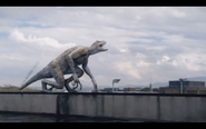 Microraptor 35
