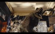 Microraptor 16