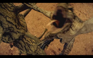 Microraptor 6