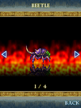 Beetle Name
