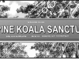 Love Pine Koala Sanctuary