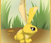 The Sun bunny