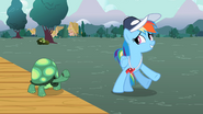 Rainbow Dash turning away from Tank S2E07