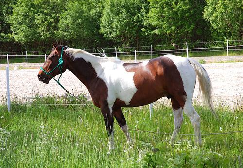 File:Pretty horse.jpg