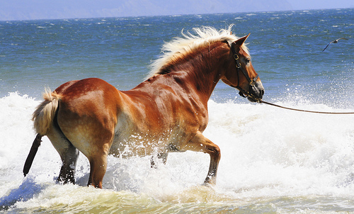 File:Horse ... nice day for a swim.jpg