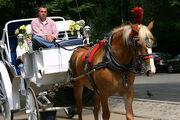 04.HorseDrawnCarriage.CPS.NYC.06sep07