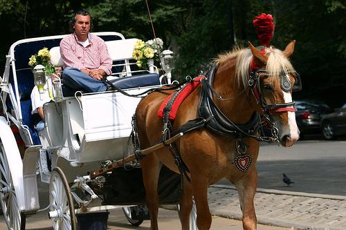 File:04.HorseDrawnCarriage.CPS.NYC.06sep07.jpg