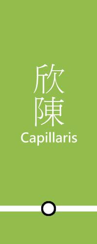 CapillarisB