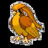 Survivor Pidgeot
