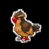 Survivor Pidgey