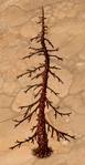 Dry Fir-Tree 25
