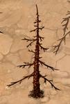 Dry Fir-Tree 20