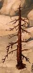 Dry Fir-Tree 45