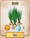 Seed - Onion