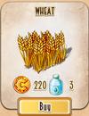 Seed - Wheat