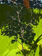 PlantFibersOverworldModel