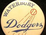 Waterbury Dodgers